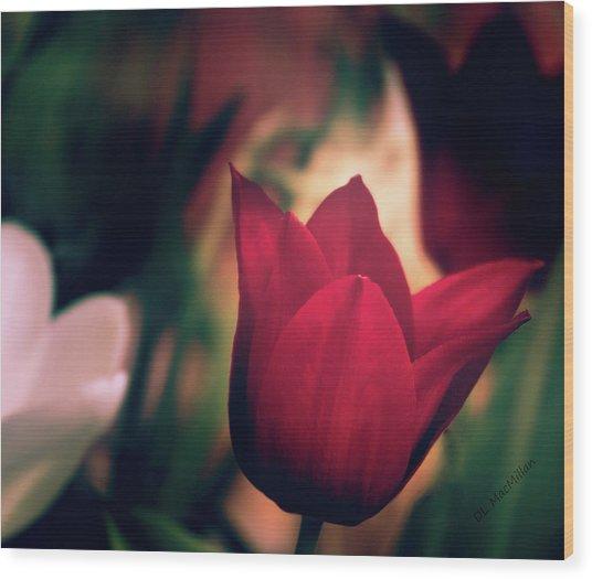 Ruby Red Tulip Wood Print
