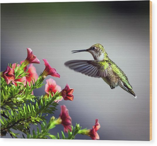 Ruby Throated Hummingbird #1 Wood Print