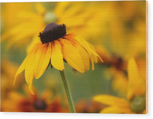 Rudbeckia In A Cloche Hat Wood Print