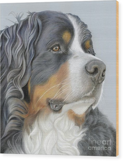 Wood Print featuring the painting Regal And Relaxed by Donna Mulley
