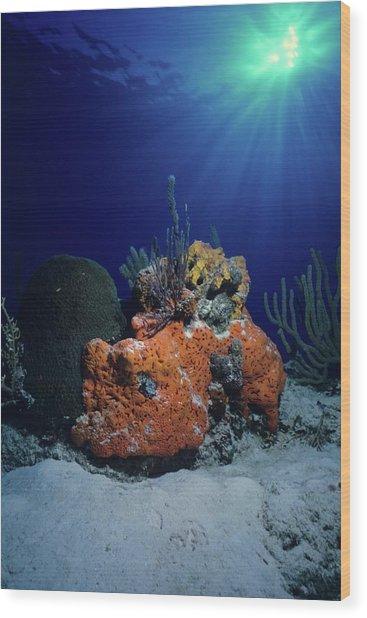 Rum Cay Rainbow Wood Print
