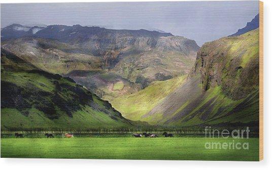 Running Horses Iceland Wood Print