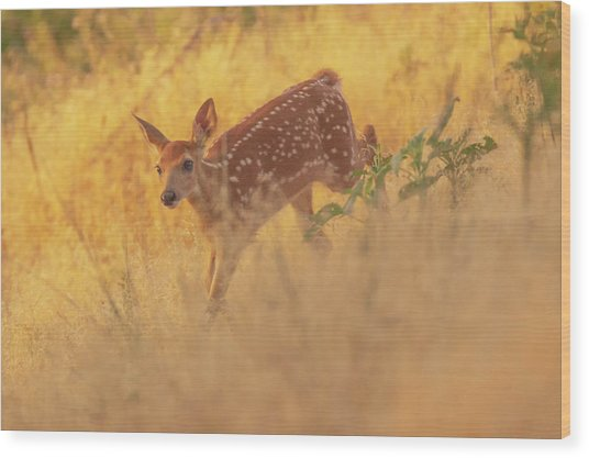 Running In Sunlight Wood Print