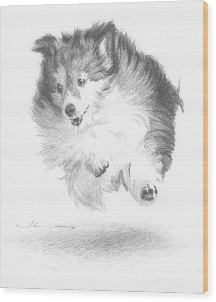 Running Sheltie Pencil Porrait Wood Print by Mike Theuer
