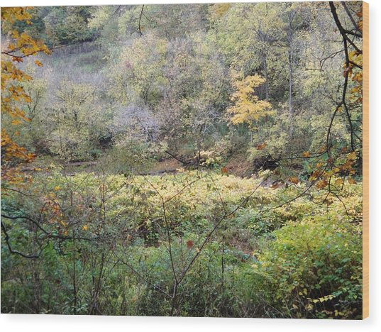 Rural Autumn West Virginia Landscape Wood Print by Terry  Wiley