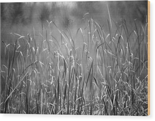 Rushes Wood Print