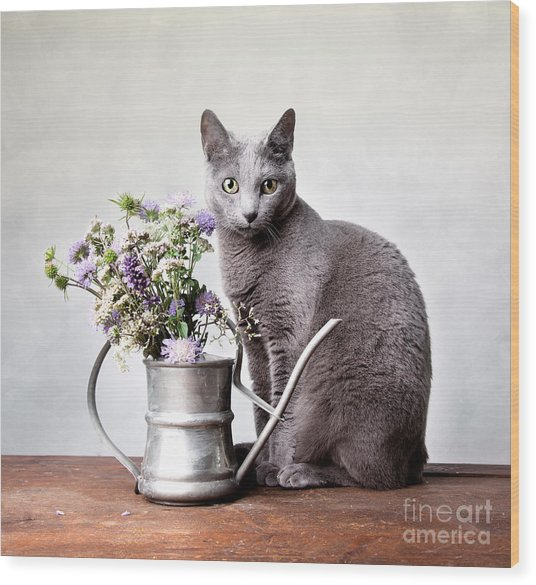 Russian Blue 02 Wood Print