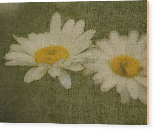 Rustic Daisies Wood Print by Tingy Wende