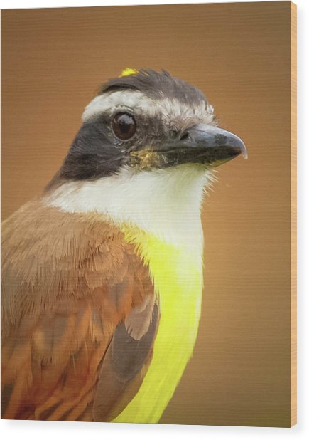 Rusty Margined Flycatcher Parque Del Cafe Colombia Wood Print