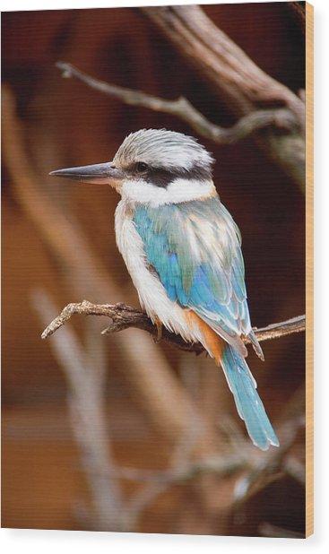 Sacred Kingfisher Wood Print