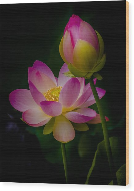 Sacred Water Lily 4 Wood Print