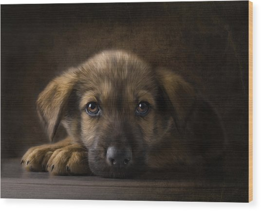Sad Puppy Wood Print