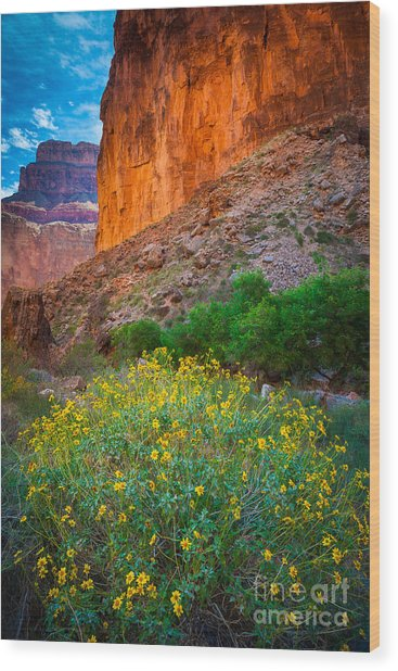 Saddle Canyon Flowers Wood Print