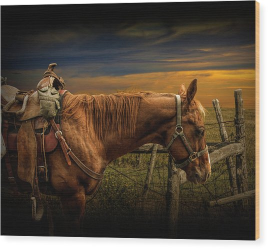 Saddle Horse On The Prairie Wood Print
