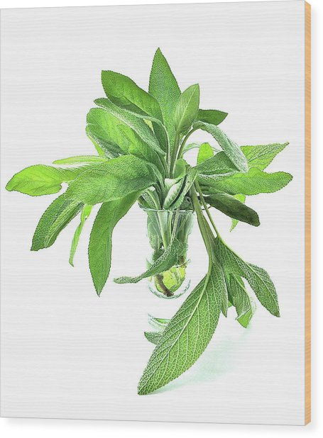 Sage Wood Print