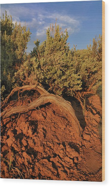 Sagebrush At Sunset Wood Print