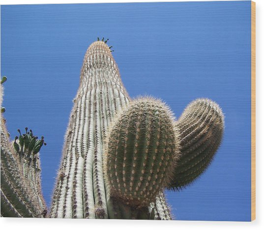 Saguaro 2 Wood Print by Travis Wilson