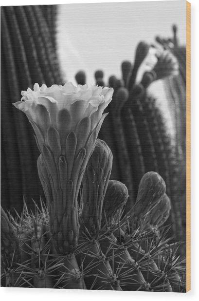 Saguaro Bloom Wood Print
