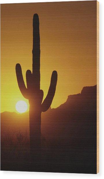 Saguaro Cactus And Sunset Wood Print