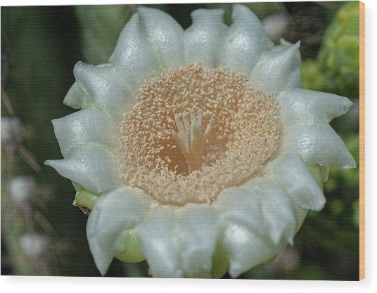 Wood Print featuring the photograph Saguaro Cactus Flower by Dan McManus