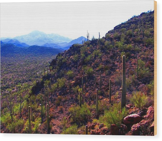 Wood Print featuring the photograph Saguaro National Park Winter 2010 by Michelle Dallocchio