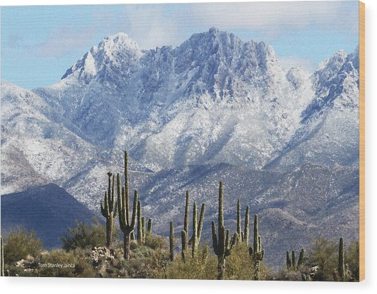 Saguaros At Four Peaks With Snow Wood Print