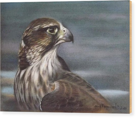 Saker Falcon Wood Print by Anna Franceova
