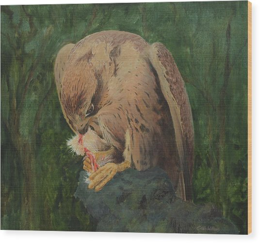 Saker Falcon Lunch Wood Print