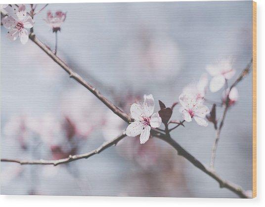 Sakura #189 Wood Print