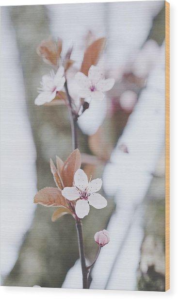 Sakura #234 Wood Print