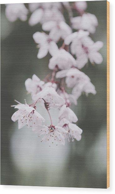 Sakura #253 Wood Print