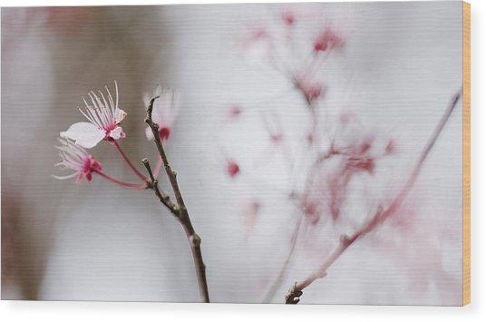 Sakura #290 Wood Print