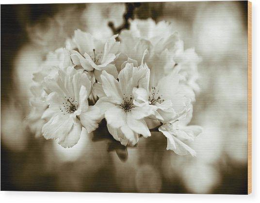 Sakura Wood Print by Frank Tschakert