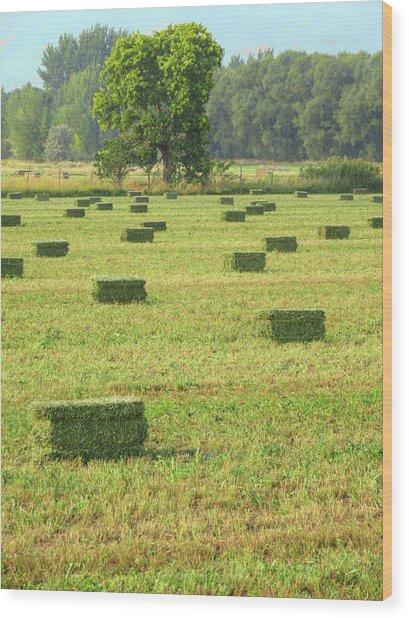 Salem Hay Field Wood Print