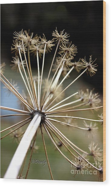 Salsify Stems Wood Print