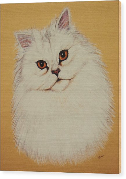 Sam - Persian Cat Wood Print by Lucy Deane