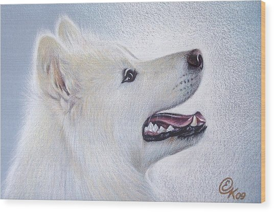 Samoyed Wood Print