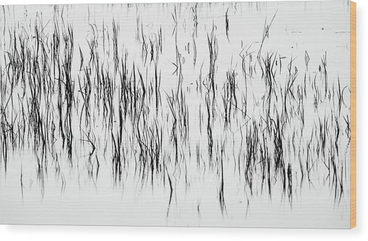 San Diego River Grass In Black And White Wood Print
