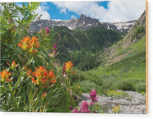 San Juans Indian Paintbrush Landscape Wood Print