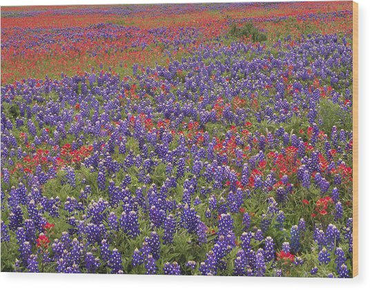 Sand Bluebonnet And Paintbrush Wood Print