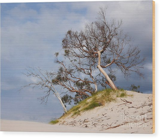 Sand Dune With Bent Trees Wood Print