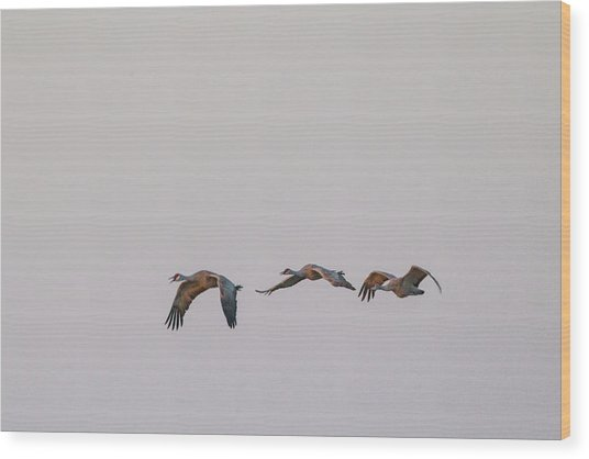 Sandhill Crane Flying 2 Wood Print