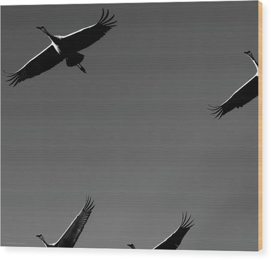 Sandhill Crane In Flight Wood Print