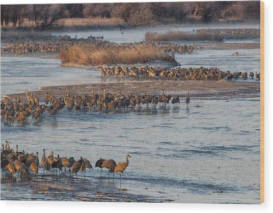 Sandhill Crane Platte River  Wood Print
