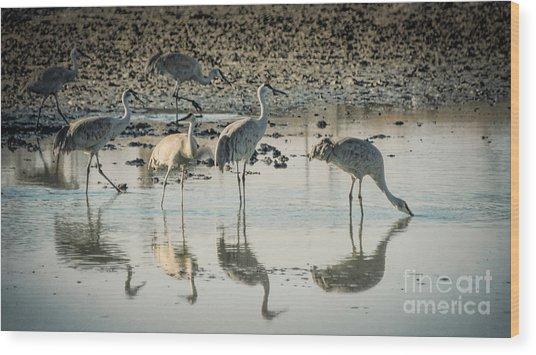 Sandhill Crane Reflections Wood Print