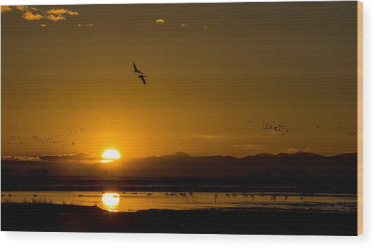 Sandhill Crane Sunrise Wood Print
