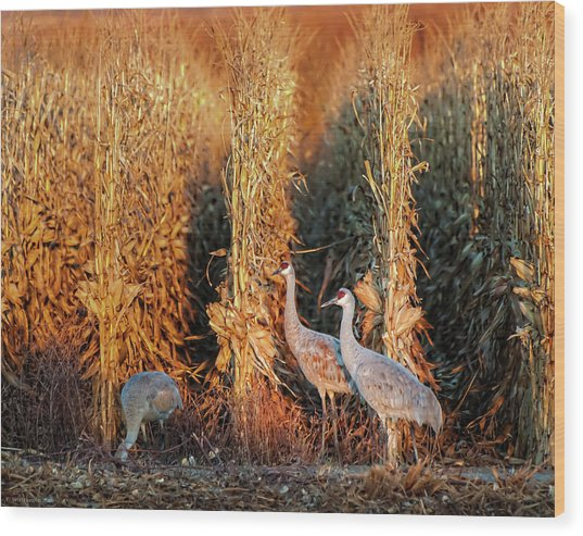 Sandhill Cranes At Sunrise Wood Print