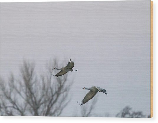 Sandhill Cranes Flying Wood Print