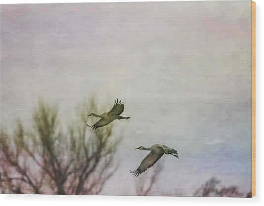 Sandhill Cranes Flying - Texture Wood Print