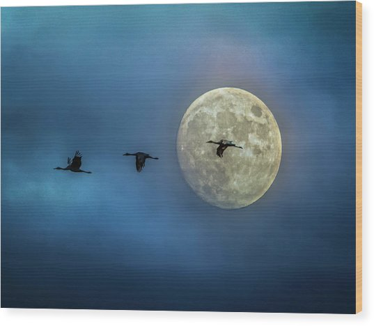 Sandhill Cranes With Full Moon Wood Print